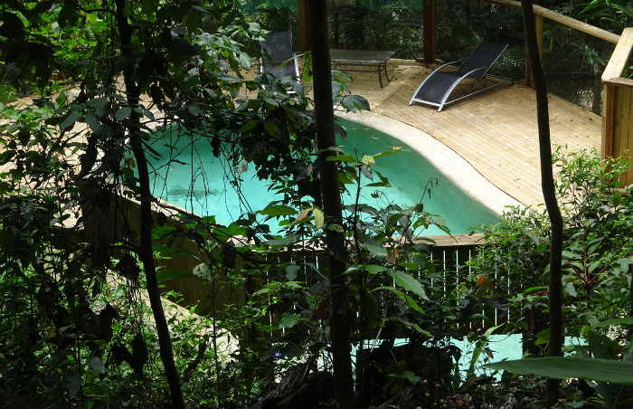 Treetops Accommodation rainforest pool