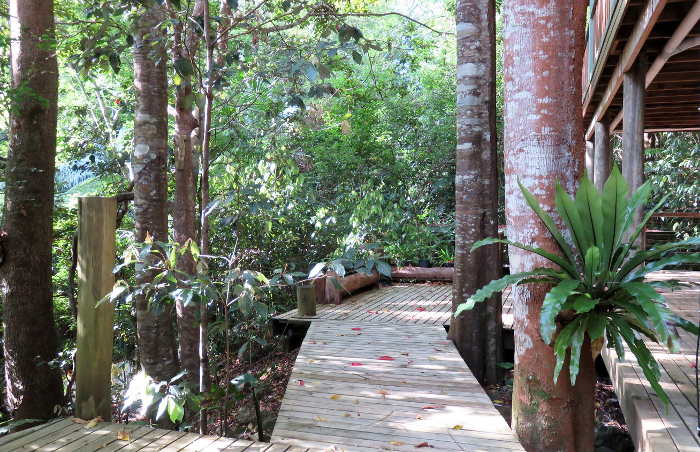 Rainforest Accommodation in Montville